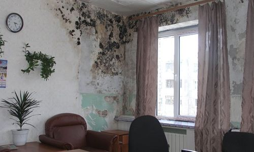 Чем и как уничтожить плесень на стенах дома