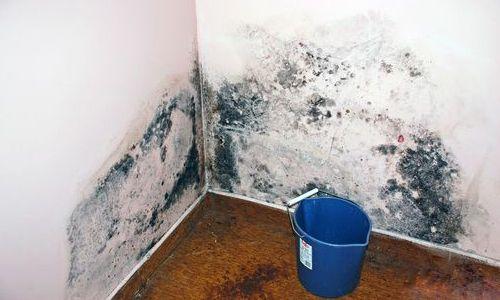 Грибок и плесень на стенах помещения