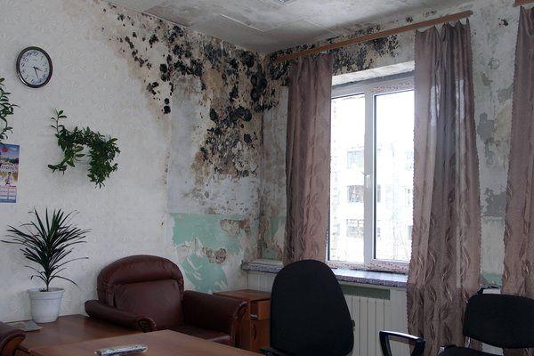 Как можно убрать грибок на стенах?