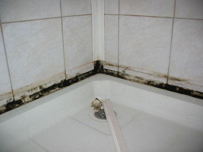 Как очистить плесень в ванной комнате