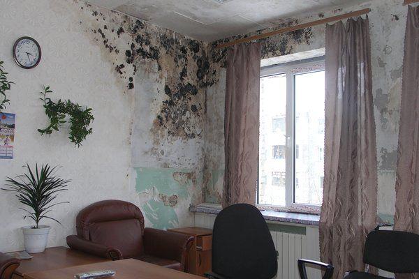 Как правильно и быстро очистить стены от плесени