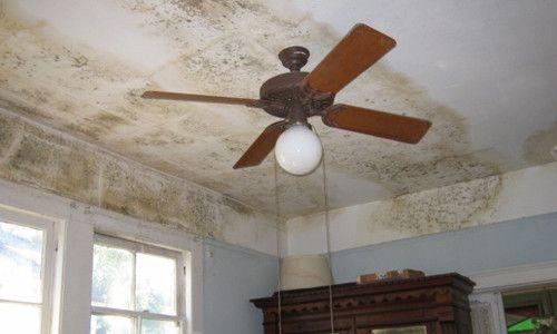 Как вывести образовавшуюся плесень на потолке?