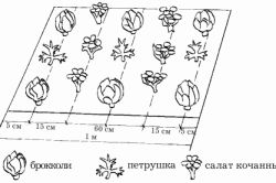 Ce să crească plante într-o seră în timpul iernii