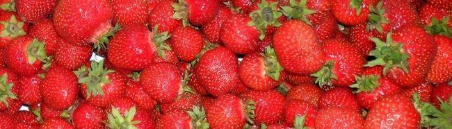 Cultivarea căpșuni în sere