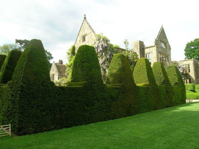 Hedge.