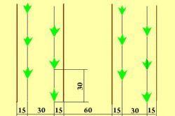 Caracteristici de creștere și îngrijirea trandafiri
