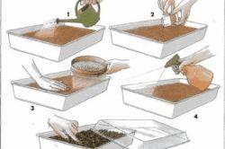 Урожай клубники в ящиках