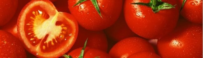 Cultivarea o recoltă bună de tomate