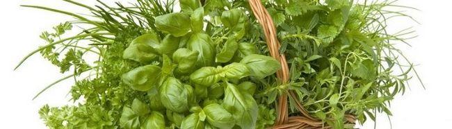 Cultivarea verdeață în sere